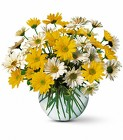Daisy Bowl from Crestwood Florist, your flower shop in Kansas City