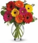 Gerbera Daisies from Crestwood Flowers, your flower shop in Kansas City